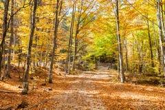 Weg met gebladerte in gouden bos Royalty-vrije Stock Foto