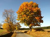 Weg met kleurenboom Stock Foto