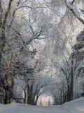 Weg met sneeuw wordt behandeld die royalty-vrije stock foto