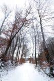 Weg met sneeuw wordt door roodachtige bomen door de herfst wordt omringd behandeld die Het landschap van de winter stock afbeeldingen
