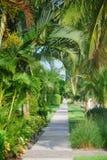 Weg met tropische bomen Stock Foto's