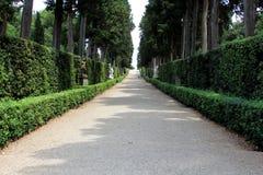 Weg met Vele Bomen aan beide kanten royalty-vrije stock afbeelding