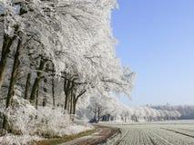 Weg met witte bomen Stock Afbeeldingen