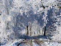 Weg met witte bomen Stock Fotografie