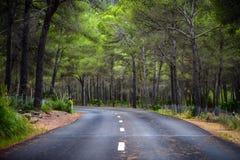 Weg in midden van bos royalty-vrije stock foto's