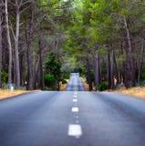 Weg in midden van bos stock foto