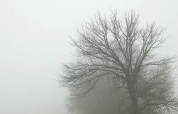 Weg in mist stock foto