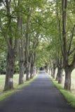 Weg mit Bäumen Stockbilder