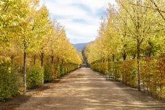 Weg mit Bäumen und Bänke im Granja in Segovia, Spanien Stockbild