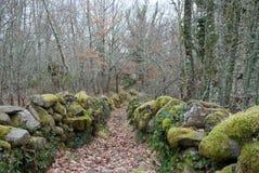 Weg mit Blättern im Holz im Herbst stockfotografie