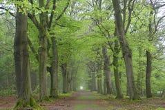 Weg mit Buchenbäumen Stockfotos