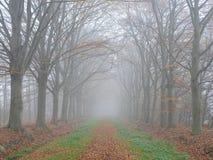 Weg mit Buchenbäumen im nebeligen Wetter lizenzfreie stockfotos