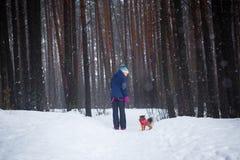 Weg mit dem Hund durch den Winterwald stockfotografie
