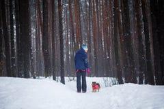 Weg mit dem Hund durch den Winterwald stockfotos