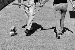Weg mit dem Hund Gehender Hund der Paare zusammen Lizenzfreie Stockfotografie