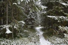 Weg mit Schnee in einem Wald Stockbild
