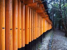 Weg mit vielen hölzernen Toren zum Schrein in Japan stockbild