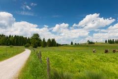 Weg mit Zaun nahe bei frischer Wiese Lizenzfreies Stockbild