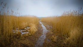Weg in moerasland met riet Stock Afbeelding