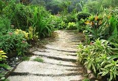 Weg in mooie tuin Stock Afbeelding