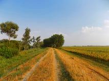 Weg nahe Sonnenblumenfeld Stockfotografie