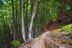 Weg neer door het hout op een berghelling Stock Foto