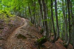 Weg omhoog door het hout op een berghelling Royalty-vrije Stock Foto