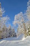 Weg onder bomen door sneeuw en rijp worden behandeld die royalty-vrije stock foto