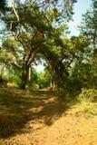 Weg onder de bomen Stock Fotografie