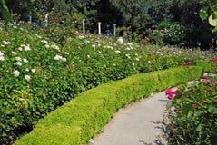 Weg onder de rozen Stock Foto's