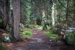 Weg onder grote bomen stock foto