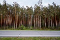 Weg op de achtergrond van bomen Naaldbos Stock Fotografie