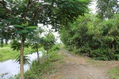 Weg op de rivierbank Stock Foto