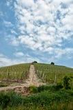 Weg op de wijngaardheuvel Stock Foto