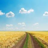 Weg op gebied met gouden oogst en blauwe hemel stock afbeelding