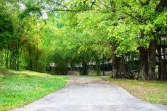 Weg openbaar park, a-gang in de tuin, bamboe en grote bomen Royalty-vrije Stock Afbeeldingen
