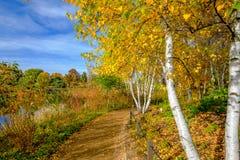 Weg in park met bomen Stock Foto