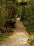 Weg in regenwoud, Fiordland Stock Afbeeldingen