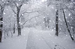 Weg in sneeuw stock afbeeldingen