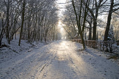 Weg in snow-covered park. Stock Fotografie