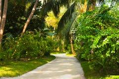 Weg in tropisch park stock afbeelding