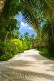 Weg in tropisch park stock fotografie