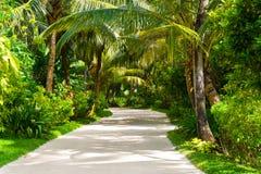 Weg in tropisch park royalty-vrije stock afbeeldingen