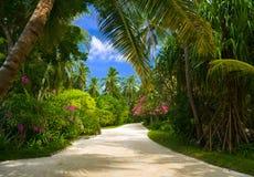 Weg in tropisch park royalty-vrije stock foto