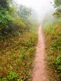 Weg in tropisch regenwoud Royalty-vrije Stock Foto's