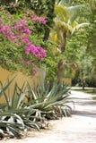 Weg in tropische tuin royalty-vrije stock afbeelding
