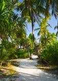 Weg in tropische wildernis royalty-vrije stock foto's