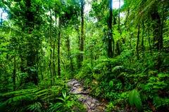 Weg in tropischem Dschungel Basse Terre lizenzfreie stockfotografie