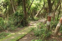 Weg in tuin onder boom met zon shain stock afbeelding