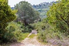 Weg tussen bomen in een nationaal park dichtbij stad Nesher Stock Afbeelding